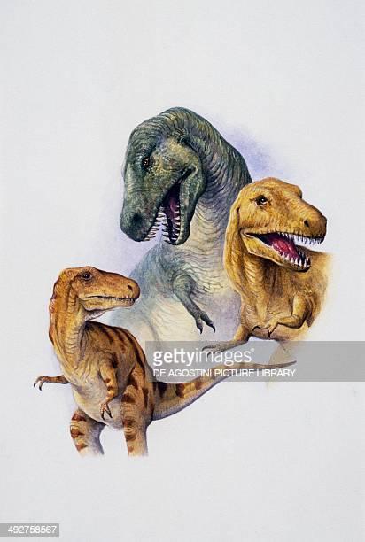 Top to bottom, T rex , Albertosaurus sarcophagus andbNanotyrannus lancensis, Tyrannosauridae, Cretaceous. Artwork by Peter David Scott.