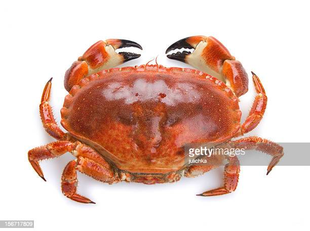 Top view of a boiled crab on a white background