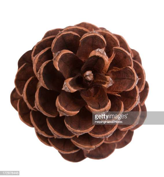 A top view of a brown pine cone on a white background