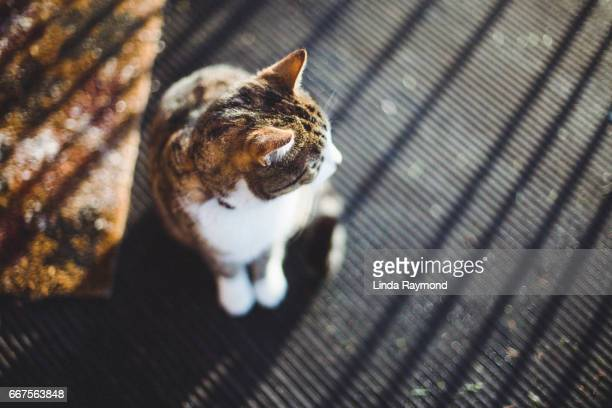 Top view of a tabby cat sitting on a porch