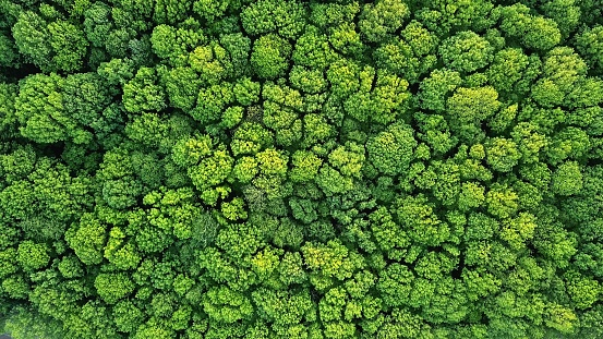 Top view of a young green forest in spring or summer 968853036