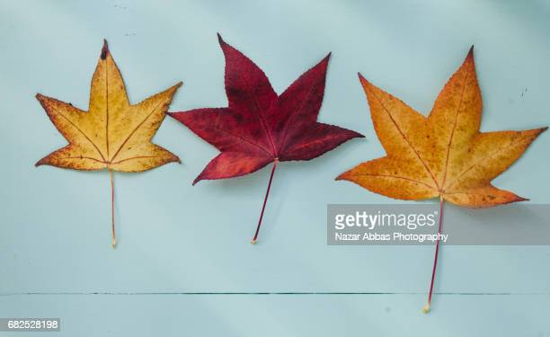 Top View Of Autumn Leaves Against Light Blue Background.