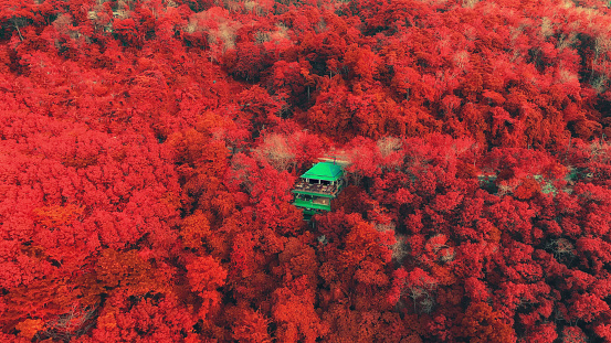 Top view of Autumn with red tree in deep forest, color changed. - gettyimageskorea