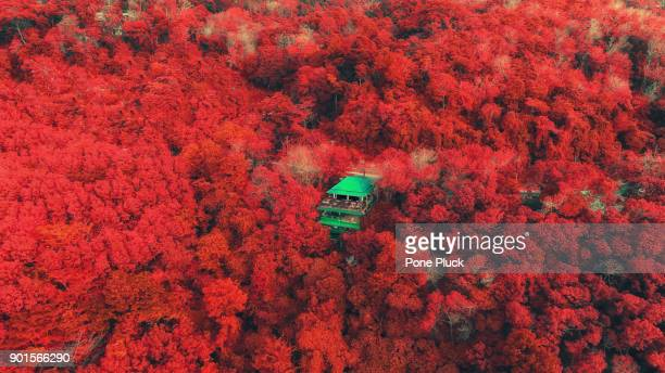 Top view of Autumn with red tree in deep forest, color changed.