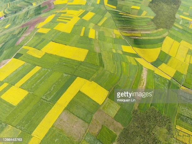 top view of drone aerial photography farm - キャノーラ ストックフォトと画像