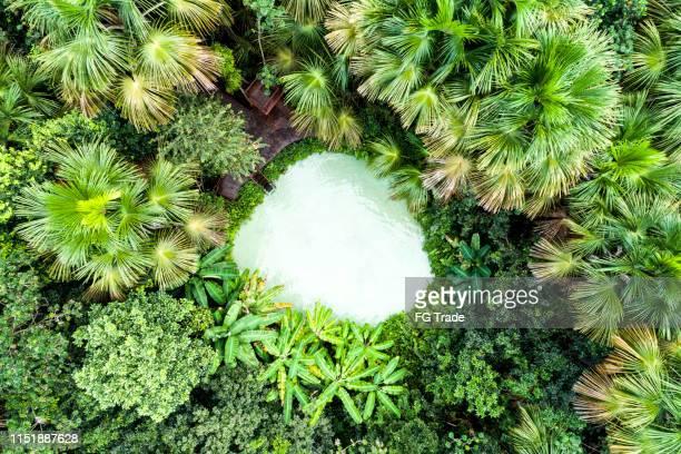 top view of fervedouro bela vista and forest in jalapão - fugir da realidade imagens e fotografias de stock