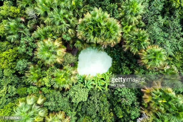 top view of fervedouro bela vista and forest in jalapão - palmas tocantins imagens e fotografias de stock