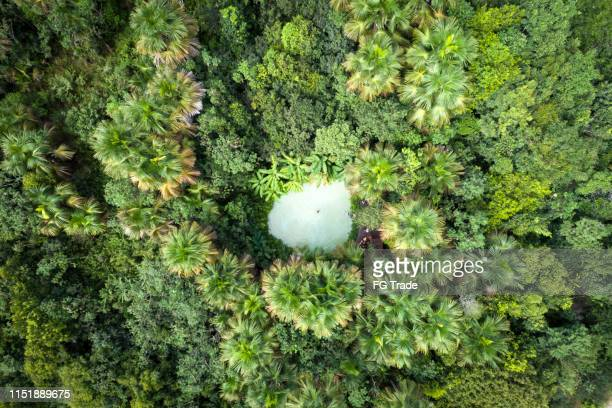 top view of fervedouro bela vista in the jalapão state park, tocantins - cerrado stock pictures, royalty-free photos & images