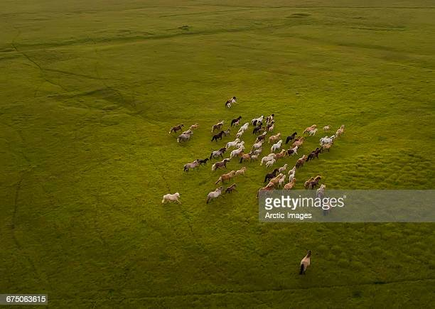top view of horses running - animals in the wild stock pictures, royalty-free photos & images