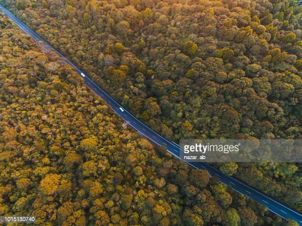 Top view of road cutting through forest.