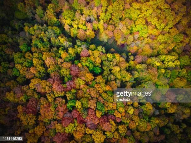 vista superior de la carretera rural en gris día de otoño - top fotografías e imágenes de stock