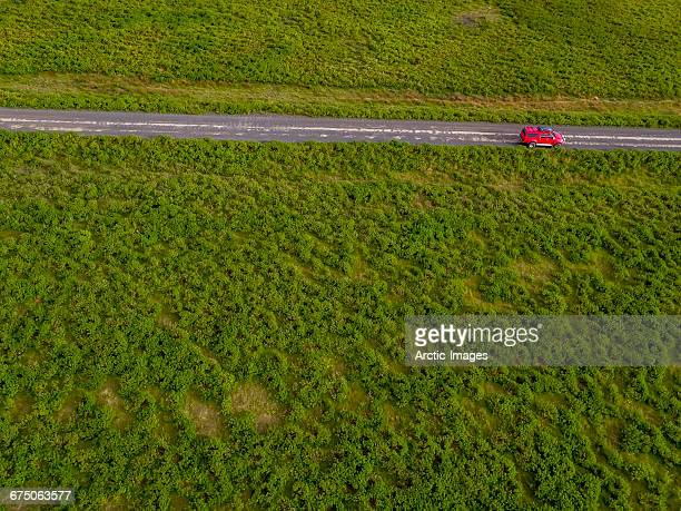 Top view of truck and lupines