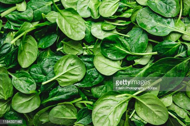top view on fresh organic spinach leaves healthy green food and vegan background - spinach stock pictures, royalty-free photos & images