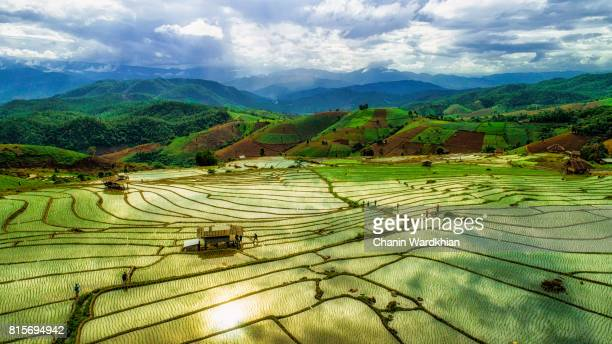 Top viwe Step of rice paddy field in Chiangmai, Thailand