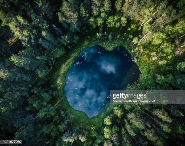 top-down aerial view of a small pond in the middle of a forest, reflecting clouds in the sky - stagno acqua stagnante foto e immagini stock