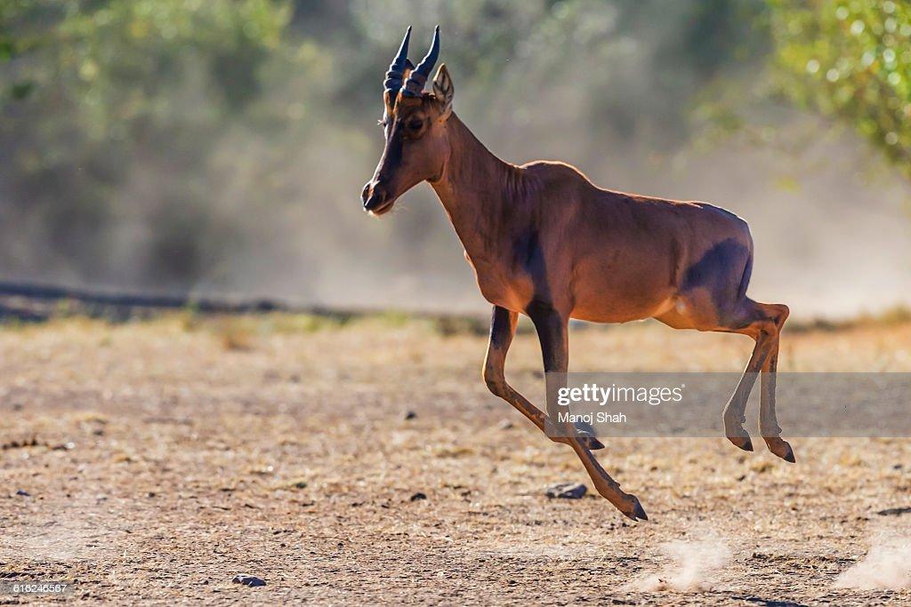 Topi running for safety : Foto de stock