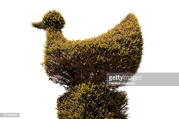 topiary bird - topiary stock photos and pictures