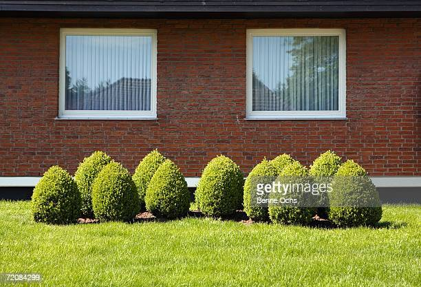 topiary garden in front of suburban house - hedge stock pictures, royalty-free photos & images