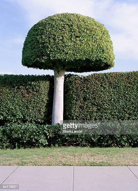 topiary garden - トピアリー ストックフォトと画像