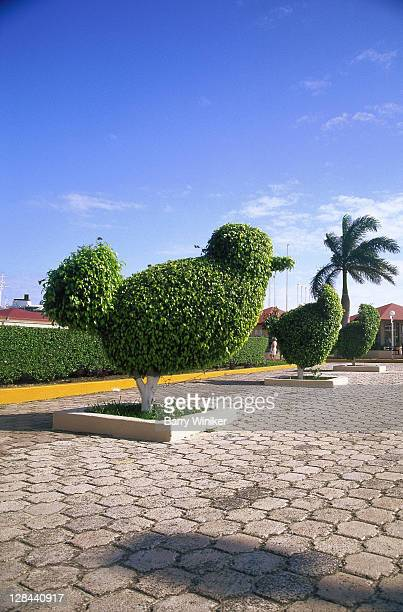 topiary near cruise terminal, cozumel, mex - トピアリー ストックフォトと画像