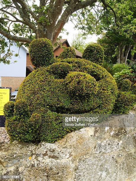Topiary On Stone Wall