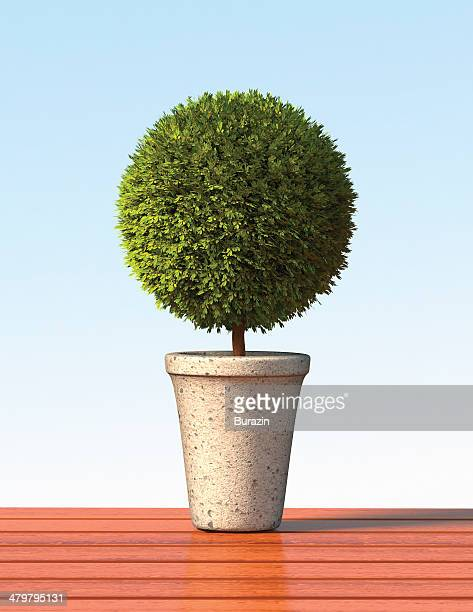 Topiary sphere plant