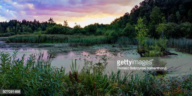 topilo lake in bialowieza forest, north-eastern poland - bialowieza forest stock pictures, royalty-free photos & images
