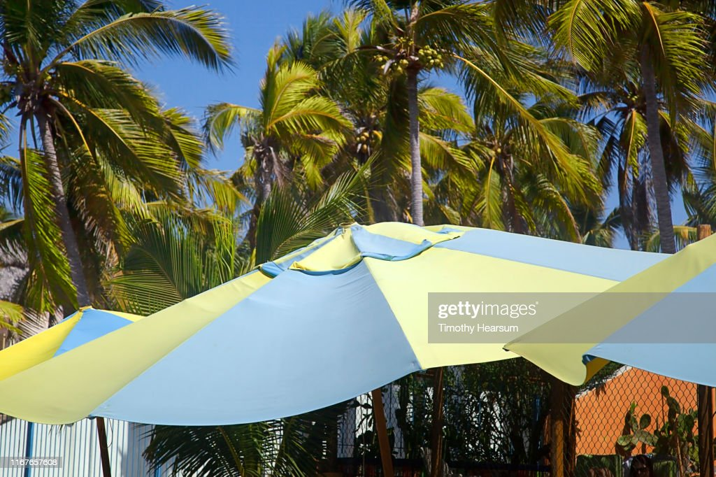 Tops of blue and yellow umbrellas in foreground, coconut palm trees and blue sky beyond; Costalegre, Jalisco, Mexico : Stock Photo