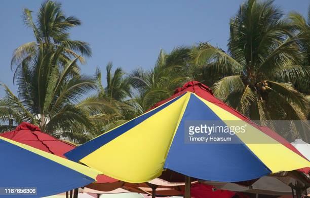 tops of colorful umbrellas in foreground, coconut palm trees and blue sky beyond; costalegre, jalisco, mexico - timothy hearsum - fotografias e filmes do acervo