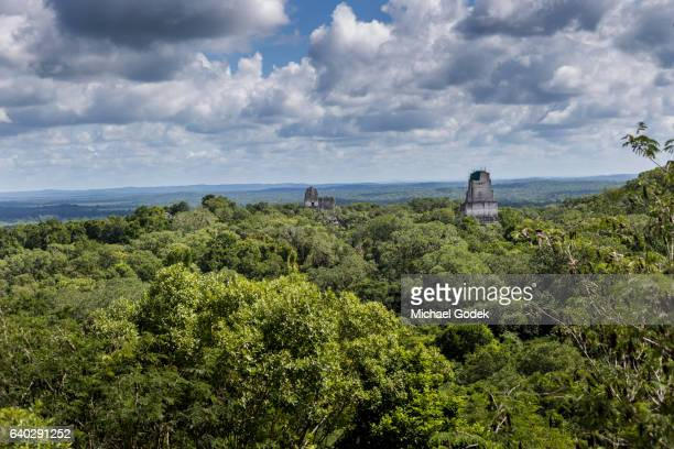 tops of mayan ruins peek over the tree canopy in tikal national park - viewpoint stock pictures, royalty-free photos & images
