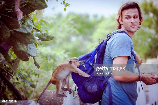 Toque macaque monkey stealing from a man's backpack, Dambulla, Sri Lanka
