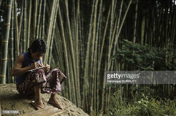Toraja man writing in the shadow of the bamboos near Rantepao in Sulawesi Indonesia