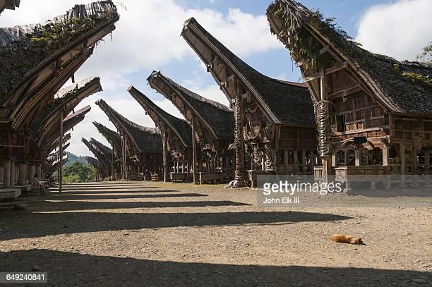 Torajan houses (tongkonan)