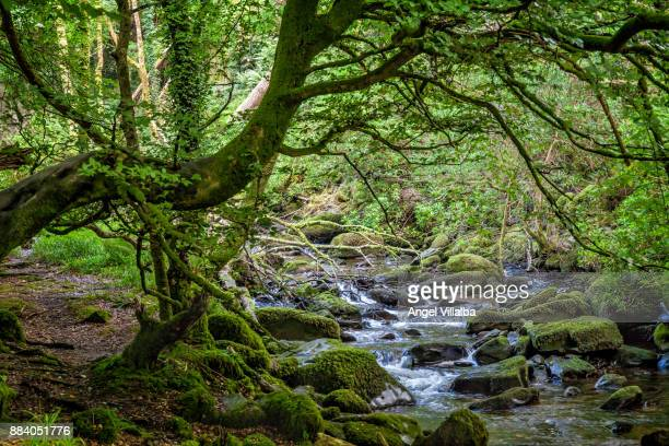 torc waterfall - ring of kerry stock photos and pictures