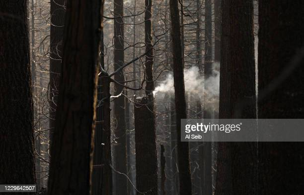 Torched trees still smolder as a group from Save The Redwoods League walk through the 530 acres of the privately owned Alder Creek grove that Save...