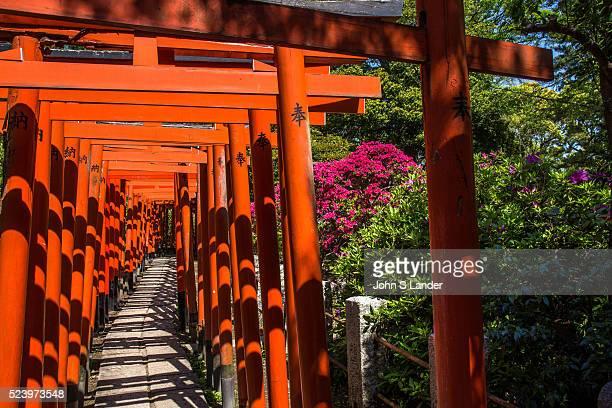 Torii at Nezu Shrine Azalea Garden Nezu Shrine is without a doubt most famous for its unique undulating azalea garden built along hills and trails It...