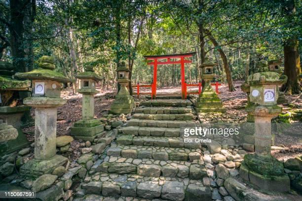 porte torii dans la forêt primeval de kasugayama, inscrite au patrimoine mondial de l'unesco, parc de nara. japon - saint eloi photos et images de collection