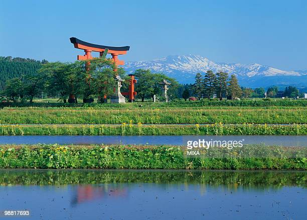 torii gate, tsuruoka, yamagata, japan - shinto shrine stock pictures, royalty-free photos & images
