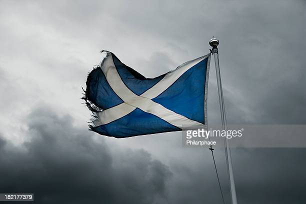 torn scottish flag in the storm - scotland flag stock photos and pictures