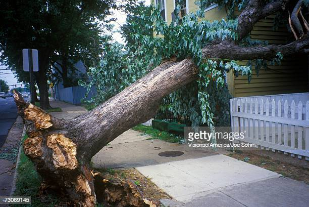 """""""tornado damage, downed tree between two houses, alexandria, va"""" - fallen tree stock pictures, royalty-free photos & images"""