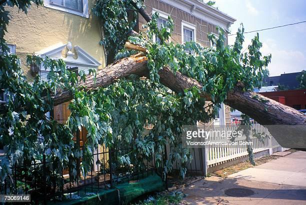 """Tornado damage, downed tree between two houses, Alexandria, VA"""