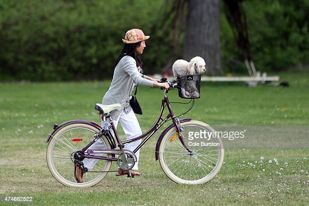 Toronto Canada May 24 A woman walks her bicycle with her dog in the basket over the grass on Wards Island close to Algonquin Islands a part of the...