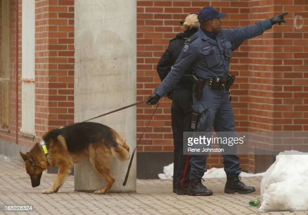 CALL Toronto031705 RPJA K9 unit scouts the court yard for suspects and a spot to relieve himself while on the scent A shooting call brought the ETF...