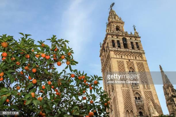 torre de la giralda - la giralda fotografías e imágenes de stock