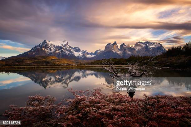 torres del paine, chile - patagonia chile stock photos and pictures
