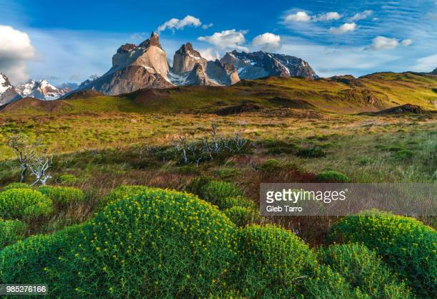 torres del paine national park in patagonia, chile. - torres del paine national park stock photos and pictures