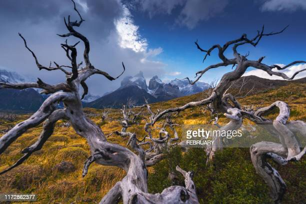 torres del paine national park, patagonia, chile. - patagonische anden stock-fotos und bilder