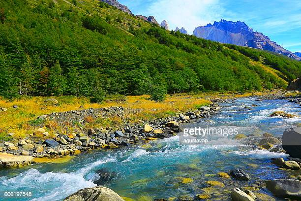Torres Del Paine, river stream, Chilean majestic Patagonia landscape woodland