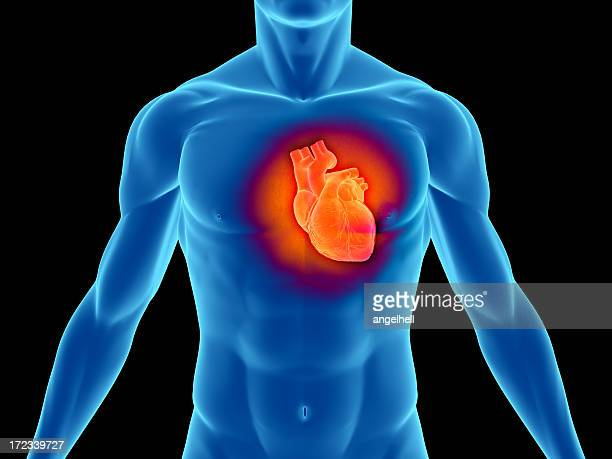 torso of a man highlighting the heart - human heart stock pictures, royalty-free photos & images