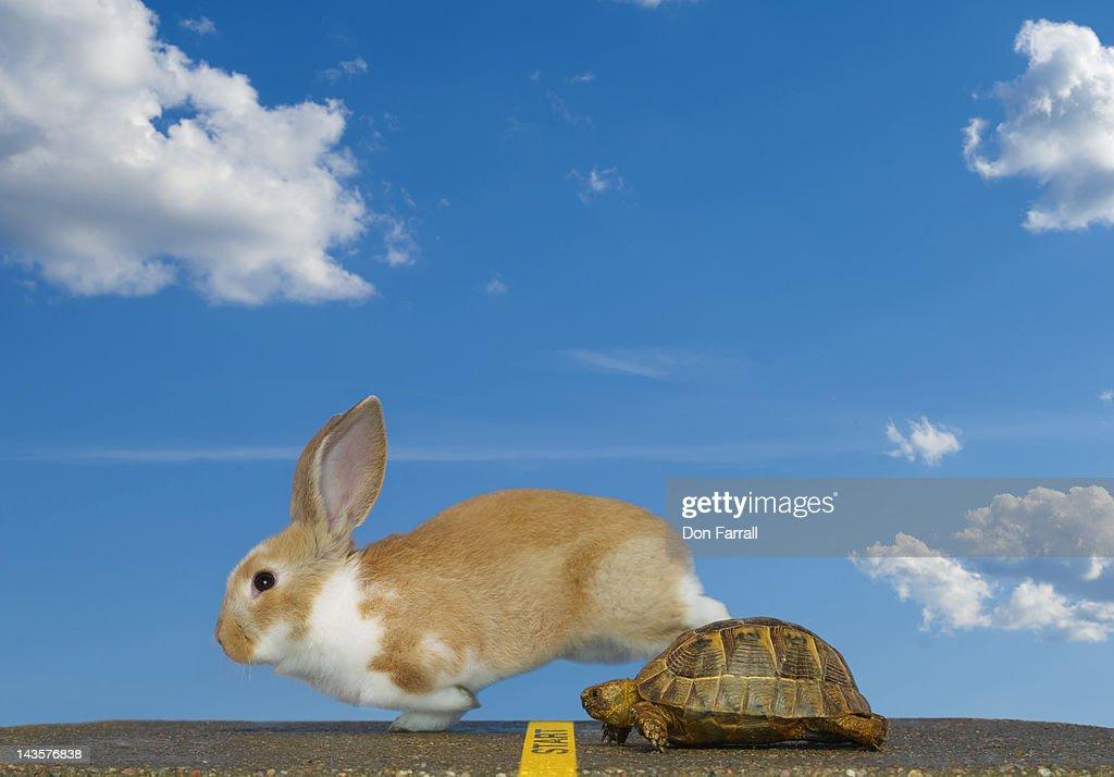 Tortoise and Hare, Start : Stock Photo